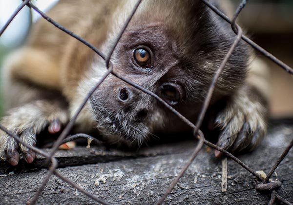EL TRÁFICO DE ANIMALES, LA TERCERA ACTIVIDAD ILÍCITA MÁS REDITUABLE EN EL MUNDO