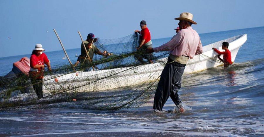 Autoridades del sector pesquero no tienen una visión de política sustentable: diputada Márquez Zapata