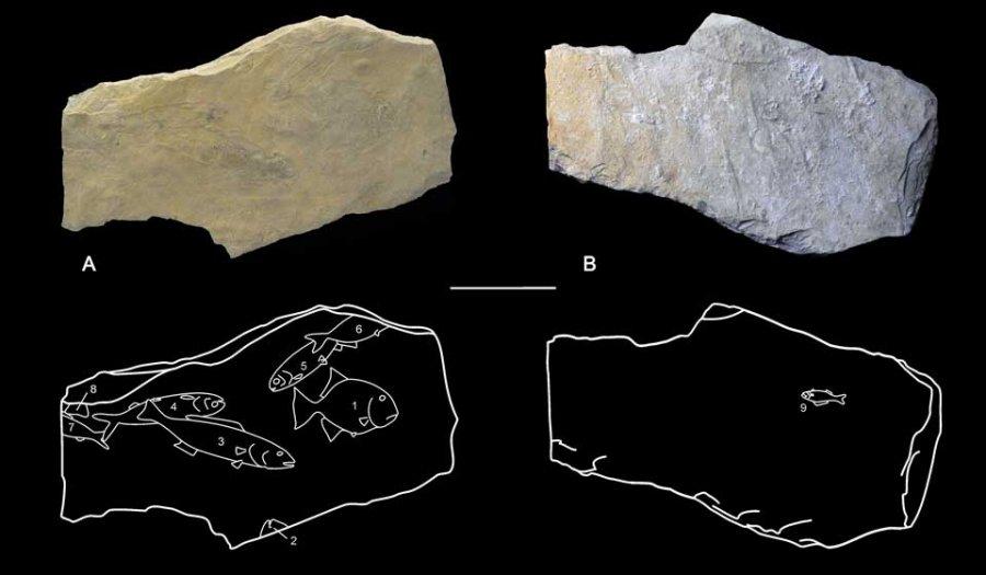 Descubren en los mayas de Palenque rasgos de modernos paleontólogos