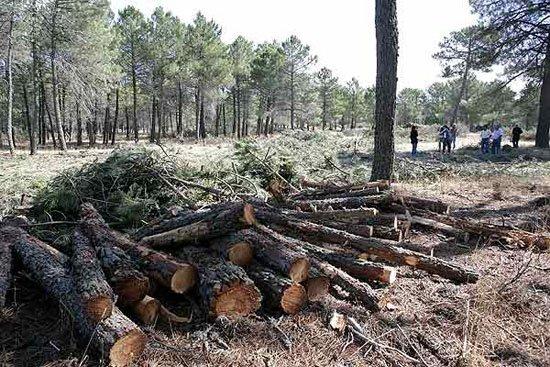 Senado llama a redoblar esfuerzos para impedir tala clandestina de bosques