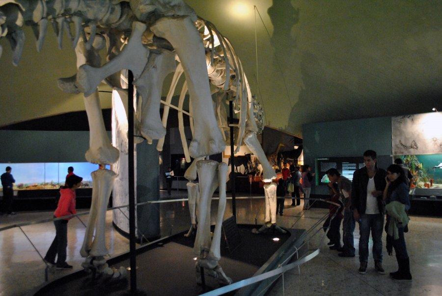 Actividades lúdico-educativas para niñas y niños en el Museo de Historia Natural