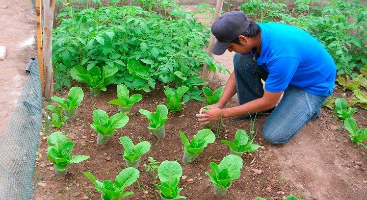 A¿Quién siembra, cuida y cosecha la hortaliza?