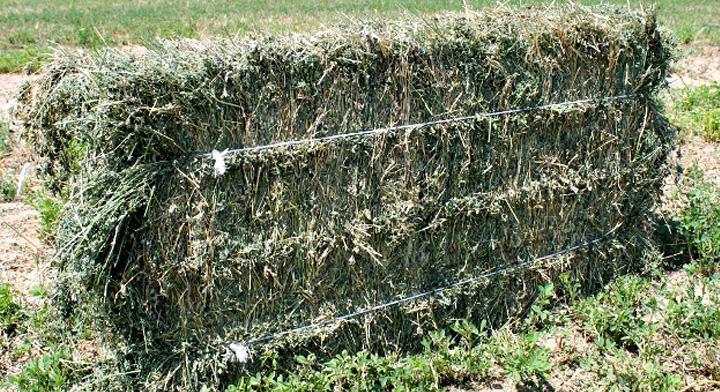 Agricultura en zonas áridas, el reto de producir