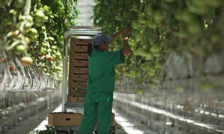 Créditos rurales, migrando de la asistencia social a la productividad