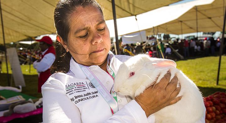 Todo sobre la producción de carne de conejo