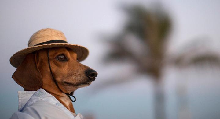 Lo que no debes olvidar si viajas con tu mascota