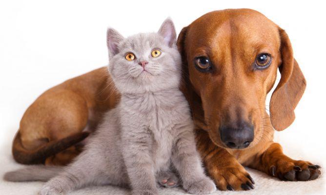 SSG impulsa la Segunda Campaña de Esterilización Canina y Felina 2016 en Celaya