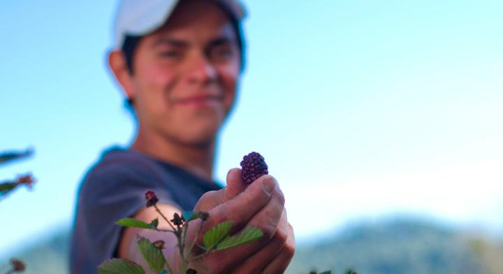 #MesDeLaJuventud MasAgro: cultivando maíz, trigo y jóvenes