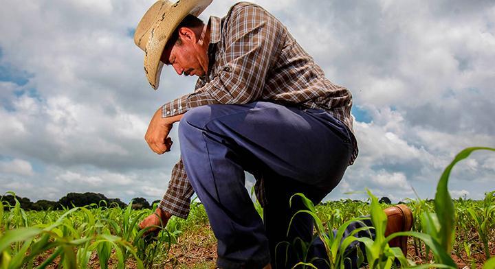 Cruzada Nacional Contra el Hambre, estrategia para la seguridad alimentaria