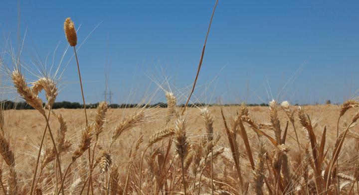 Reconversión de cultivos, una experiencia de renovación