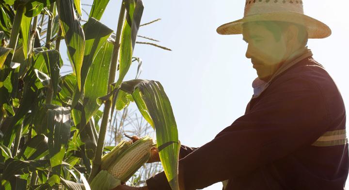 México Alimentaria 2016 Food Show: Agricultura, el campo a la vista