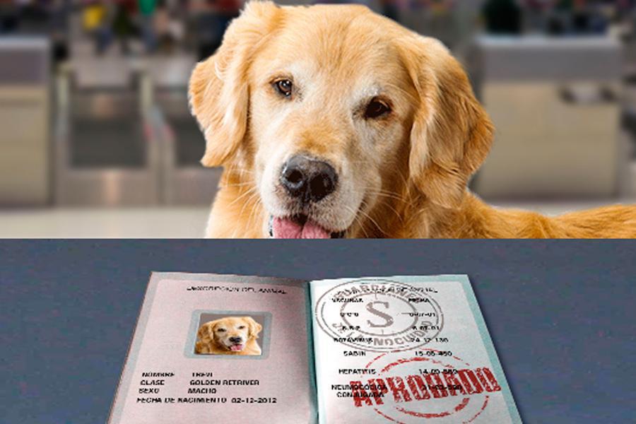 Viaja con tu mascota, conoce los procedimientos para la movilización de animales vivos