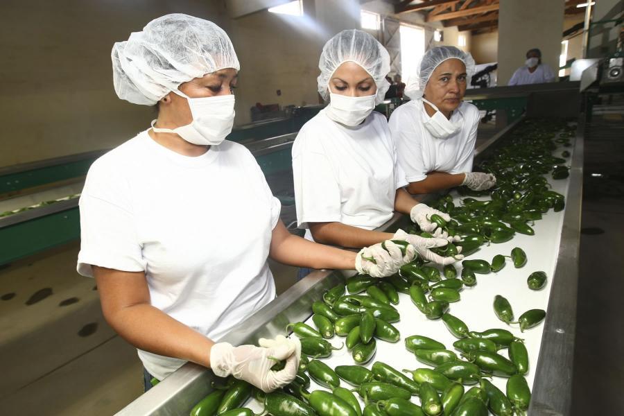 Cosecha éxitos la Productividad y Competitividad Agroalimentaria