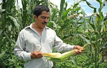PIMAF, maíz y frijol una sociedad muy productiva