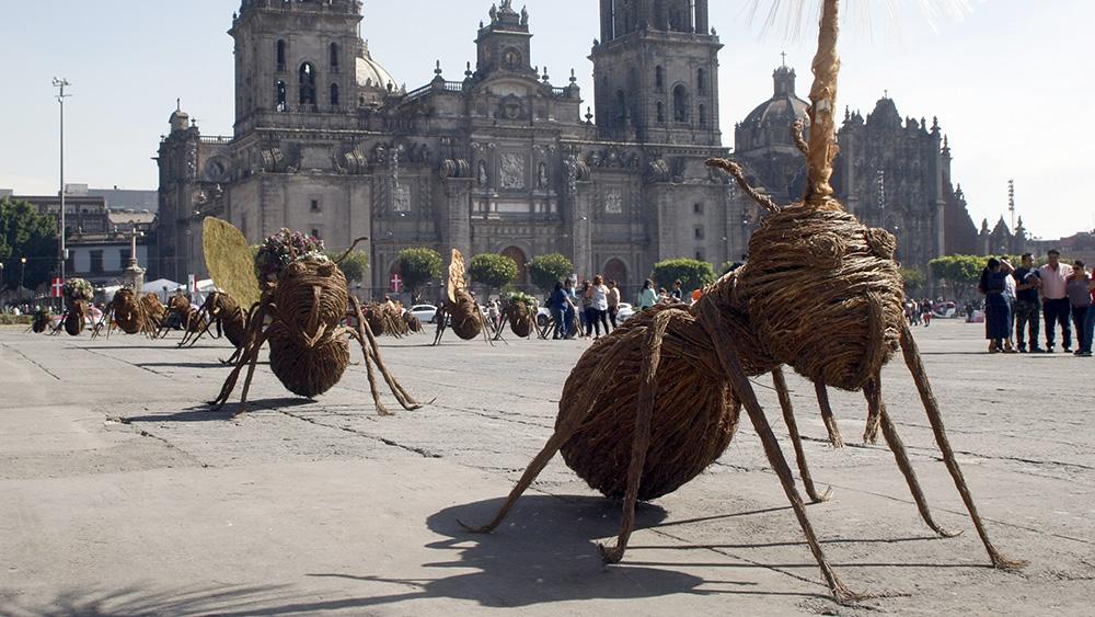 Trasladan a Zócalo Capitalino exposición de hormigas gigantes