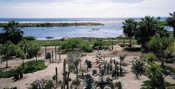 La Ruta de México, el Pueblo Mágico de Todos Santos, Baja California Sur