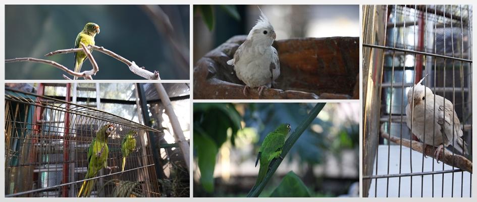 Recibe aviario nuevos huéspedes
