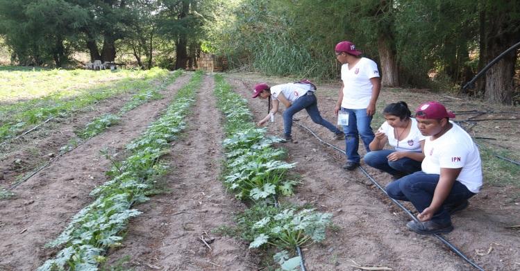 Asesoran politécnicos a agricultores de la Mixteca Oaxaqueña
