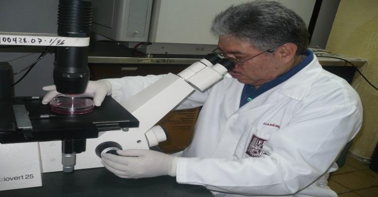 Moléculas de planta medicinal eliminan células de cáncer de mama
