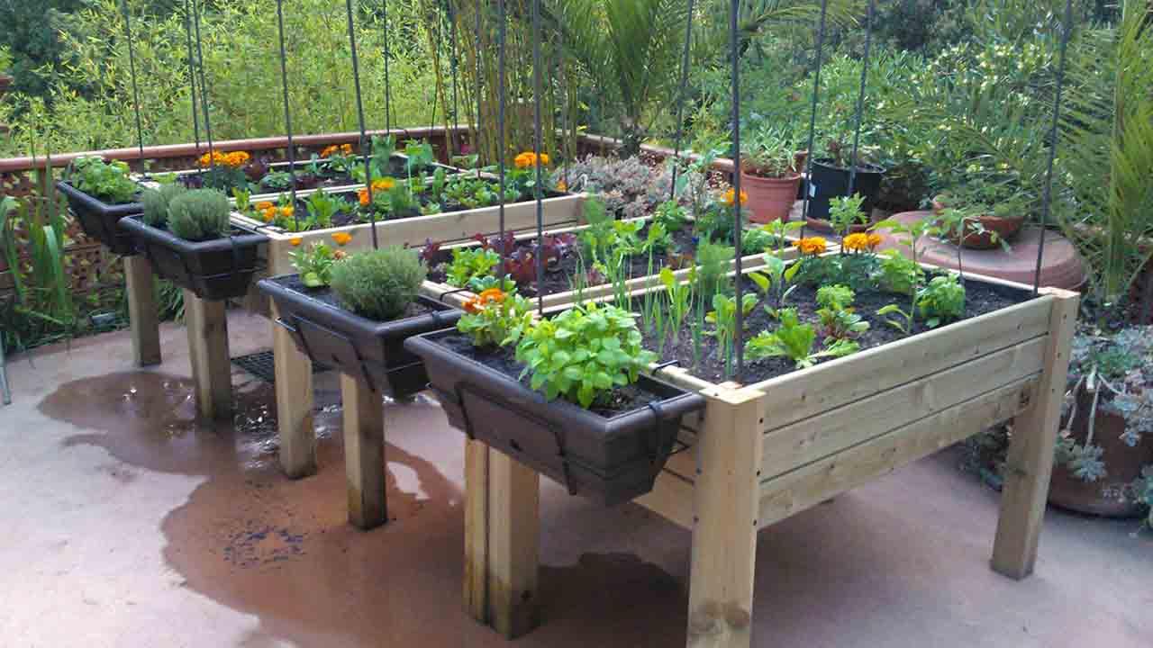 Promueve SEDEMA mejorar calidad de vida de CDMX a través de huertos urbanos