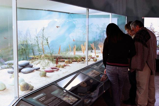 Invita Museo de Historia Natural a noche de museos de julio