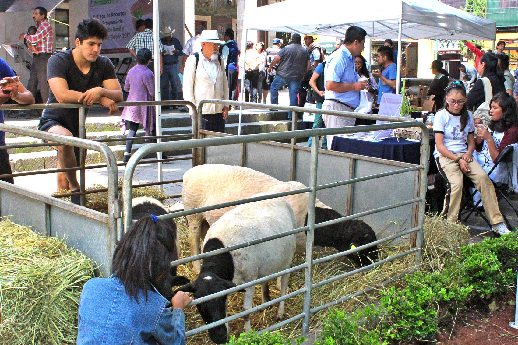 Otorga Tlalpan recursos económicos para impulsar la producción del campo