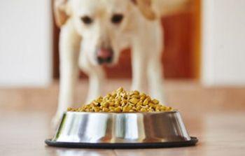¿Por qué el alimento de mi mascota trae registro SAGARPA?