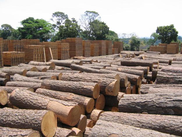 Solicitan combatir y castigar los ilícitos forestales al sur de la CDMX