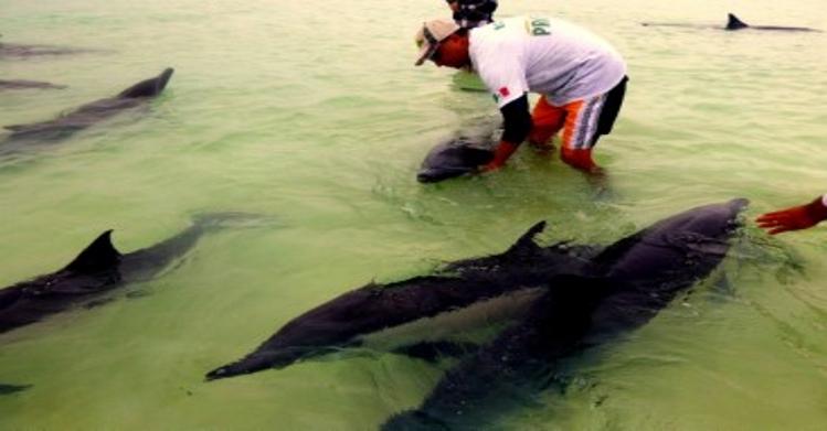 Activa colaboración del IPN en atención a varamientos de mamíferos marinos