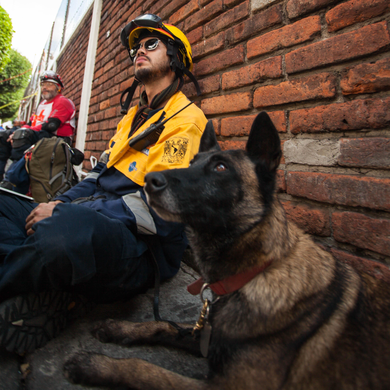DEJAN HUELLA LOS BINOMIOS PERRO-HUMANO DE LA UNAM