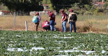 Politécnicos asesoran a agricultores y brindan servicio médico en Michoacán