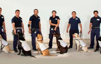 Al ingresar a México, en puertos y aeropuertos ¿por qué me revisa un perro?