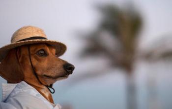 Vacaciones de fin de año ¿Puedo viajar con mi mascota?