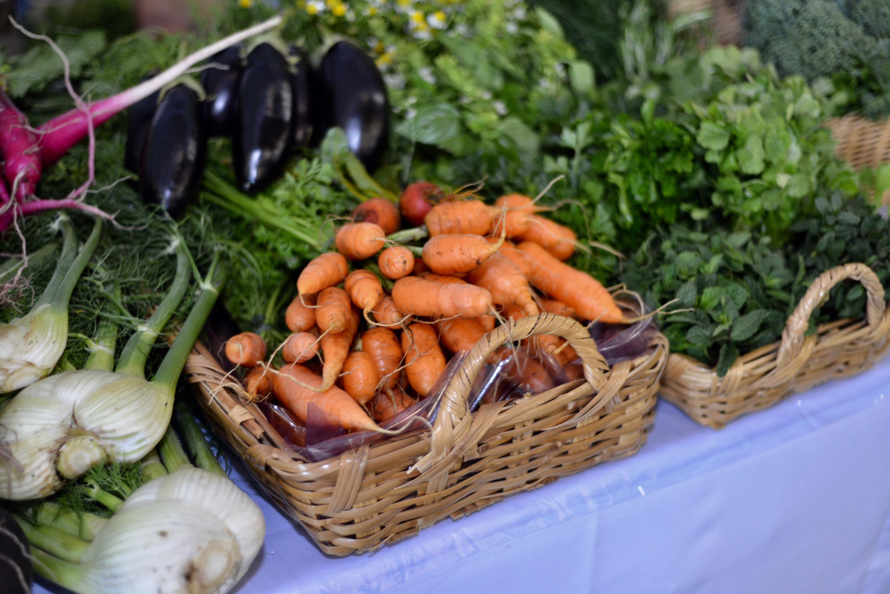 Invierte SEDEREC más de un millón de pesos en producción de hortalizas en CDMX