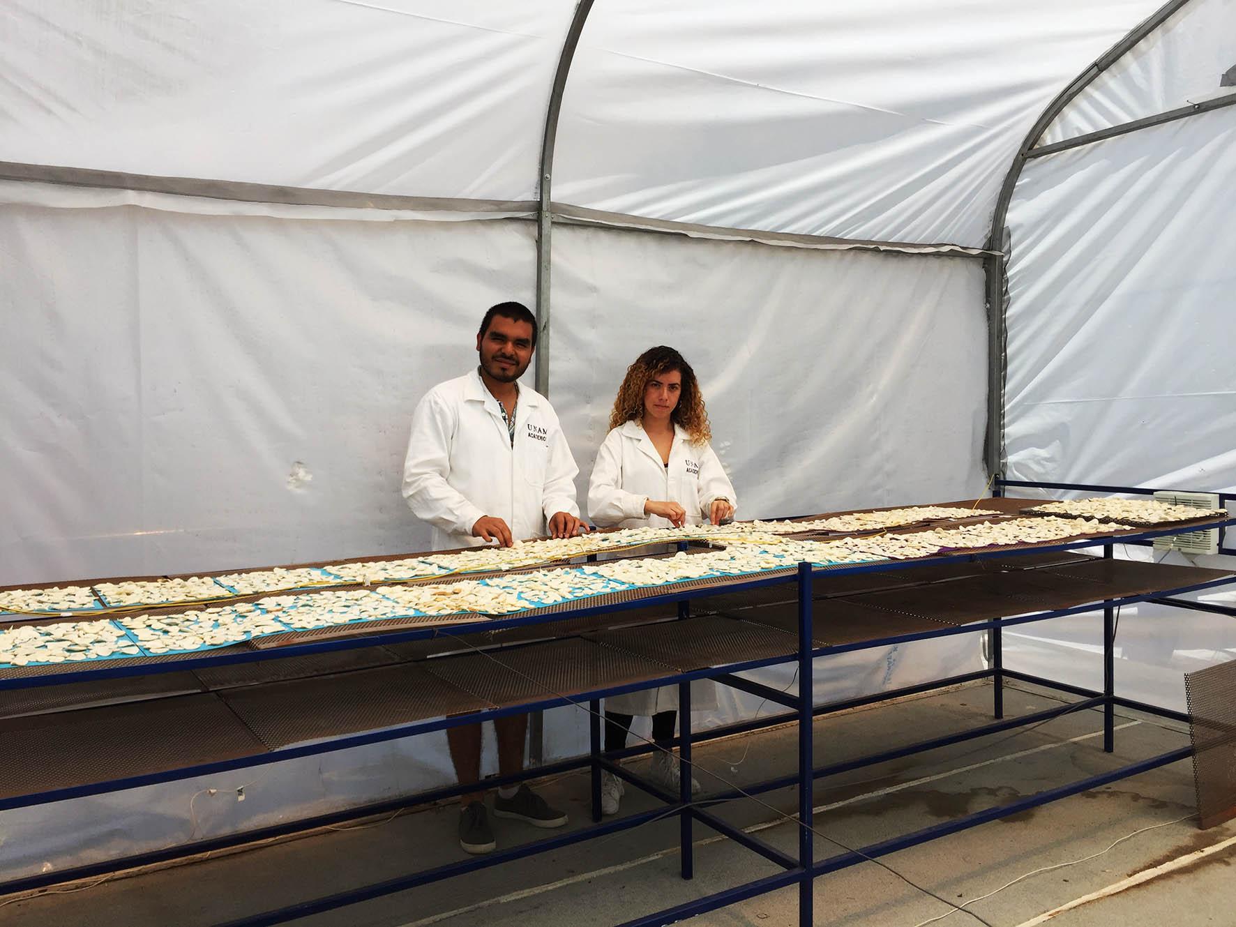 INVESTIGADORES DE LA UNAM PROPONEN CONVERTIR INVERNADEROS EN SECADORES SOLARES DE ALIMENTOS