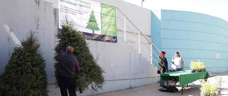 Abre DMH centros de acopio para árboles de Navidad
