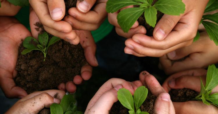 Día Mundial de la Educación Ambiental: aprender para transformar