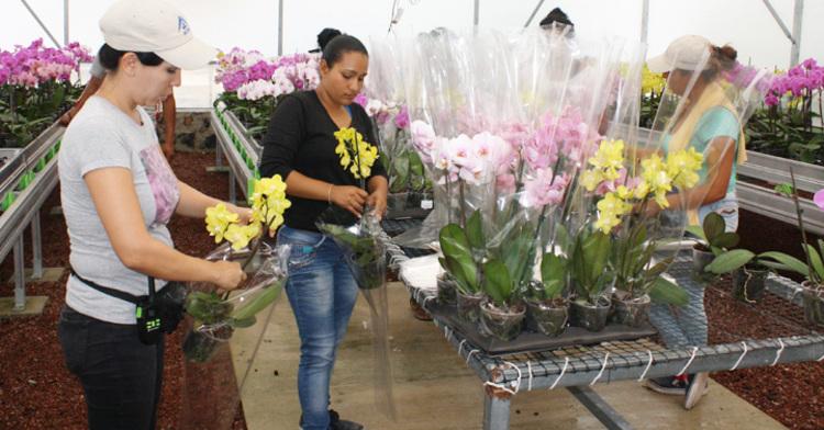 Arráigate, oportunidad productiva para los jóvenes del campo mexicano