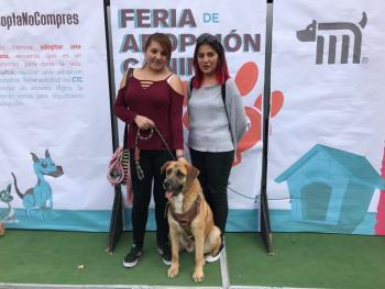 Adoptan a 20 canes en Feria