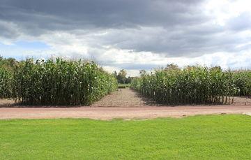 Financiamiento garantizado para el sector agroalimentario rural