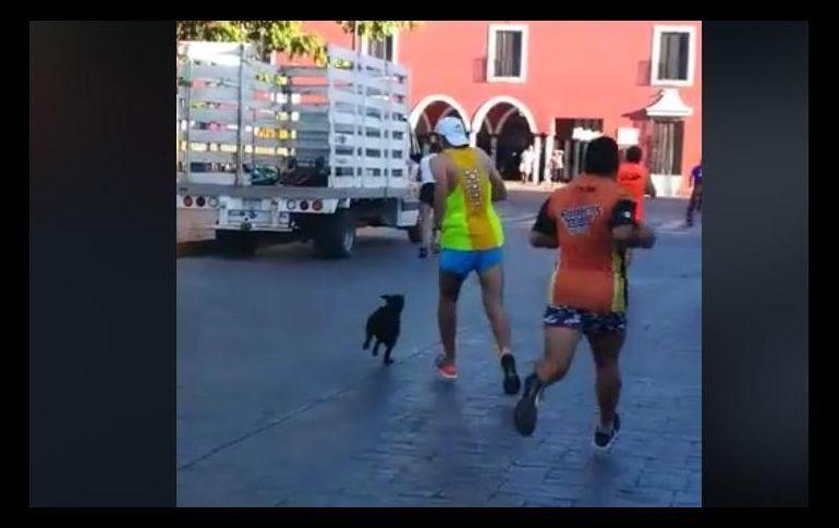 Corredor patea a perro durante maratón