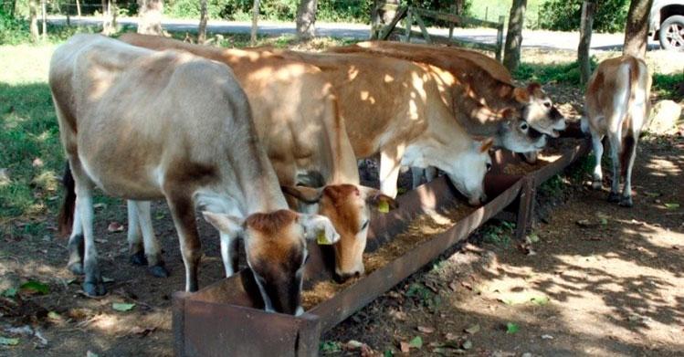 Crea investigadora politécnica suplemento alimenticio para ganado bovino