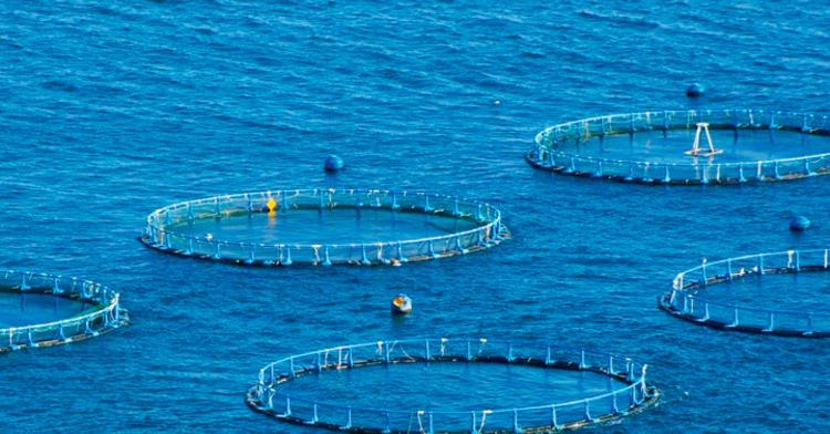 Maricultura, una alternativa en la producción de alimentos