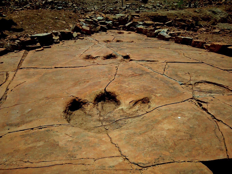 La riqueza de yacimientos fósiles de Sonora, motivo para impulsar la conservación de bienes paleontológicos