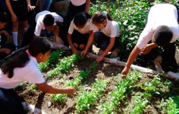 Huertos escolares, enseñanza y alimentación