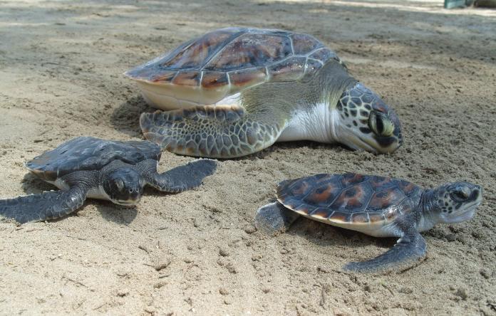 Rescatan a más de 10 mil tortugas en Madagascar