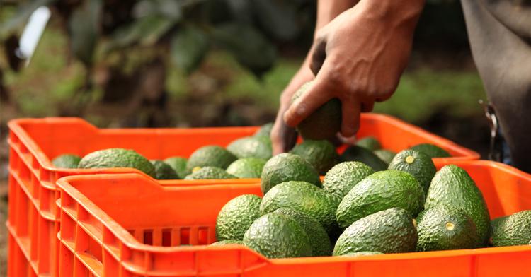 ¿Cómo beneficia la agricultura a las familias mexicanas?
