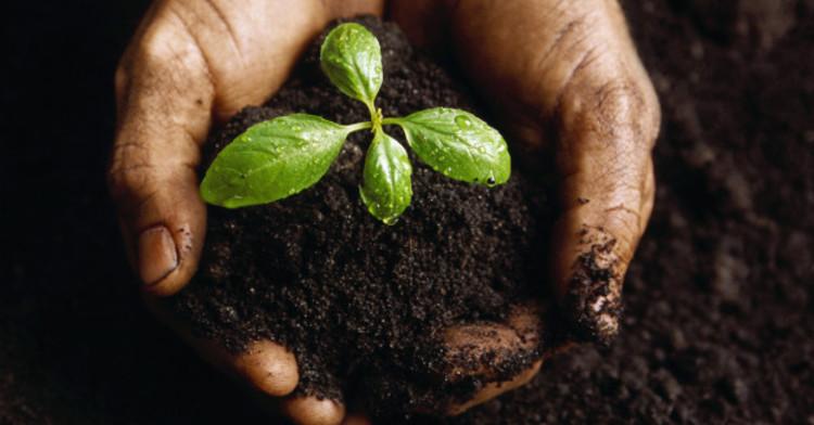 Agricultura de conservación, una práctica sustentable