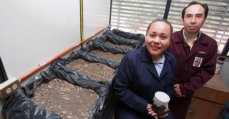IPN utiliza biopilas para tratar lodos residuales de plantas de tratamiento