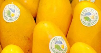 Productos orgánicos, ¿una moda o una nueva forma de consumo?